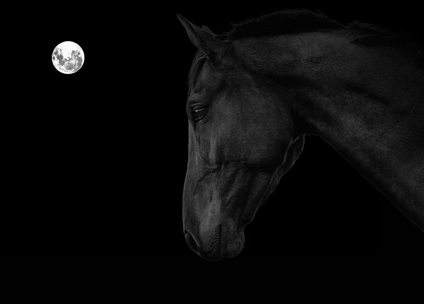 horse-and-moon