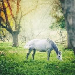 horse-grazing-in-field-in-autumn