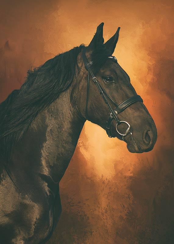horse-portrait-against-a-textured-background