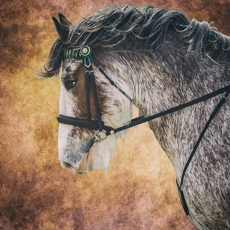 horse-under-rein-on-a-textured-background