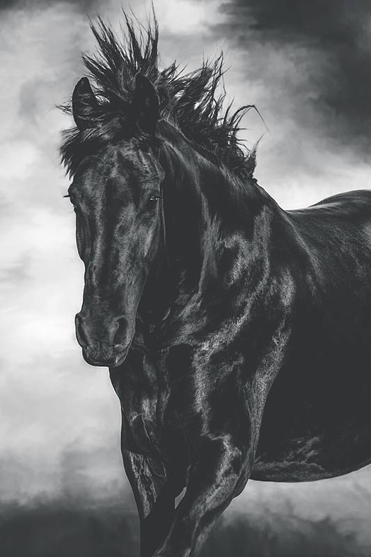horse-with-flying-mane