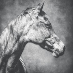 profile-of-a-horse-head