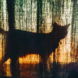 silhouette-of-cat-behind-a-curtain