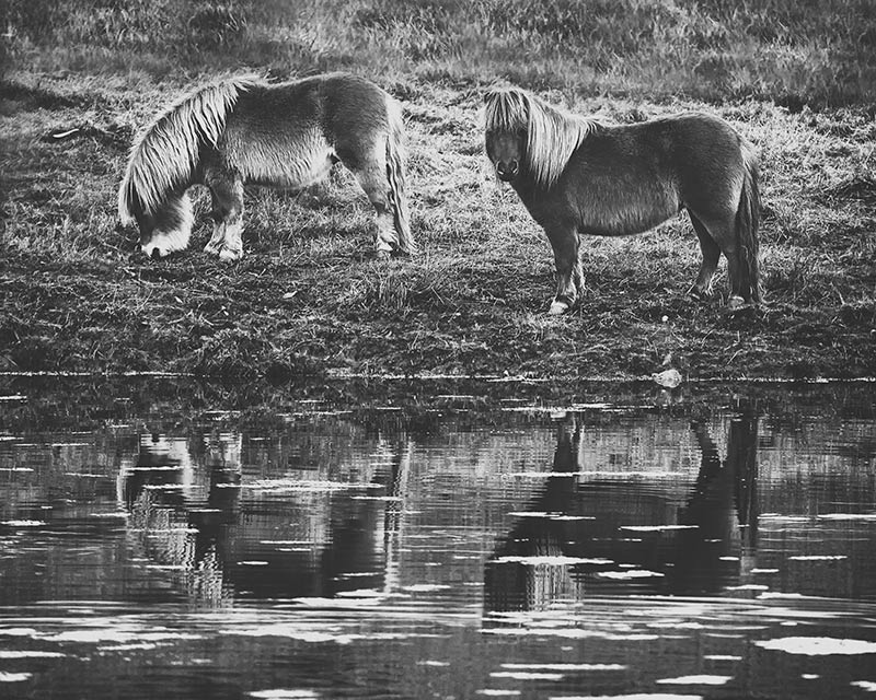 two-ponies-grazing-by-the-water